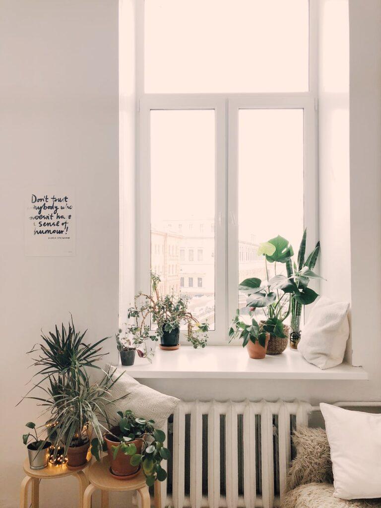 Grønne planter og indretning
